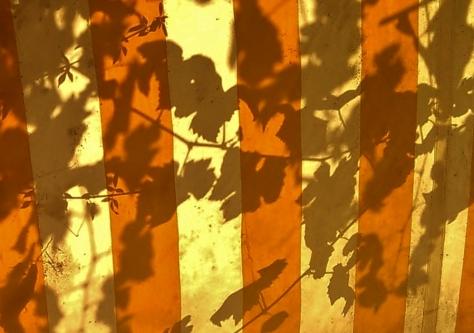 sunny shades